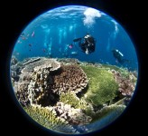 Reefs of Komodo