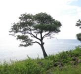 Coast Bali
