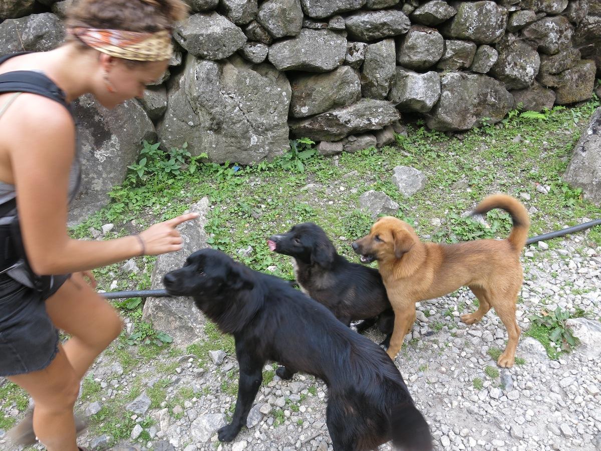 Nicole Ahne med hundar