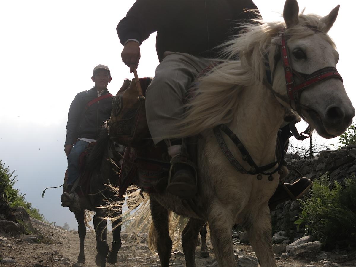 Annapurna Circuit Horse