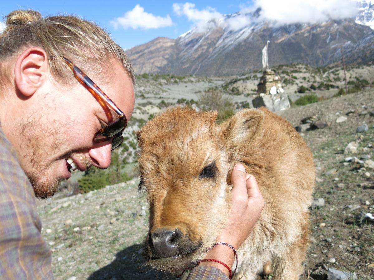 Erik Ohlson med kalv