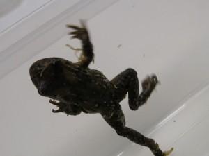 Frog New Zealand