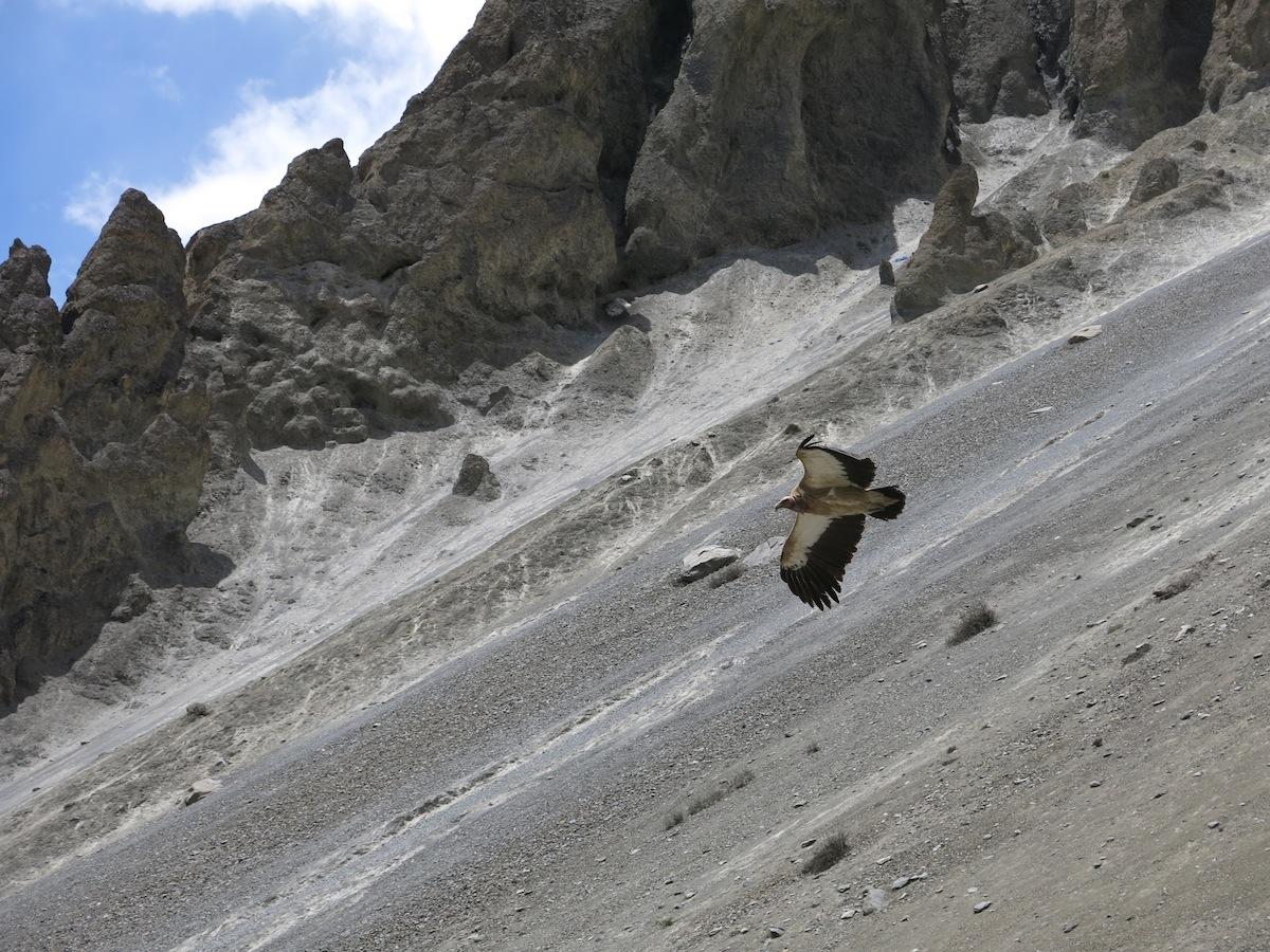 Gam i Nepal