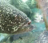 Fish in tank Hong Kong