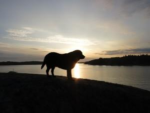 Hunden Axel