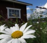 Summer cabin Sweden