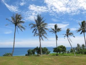 Palms in Taiwan