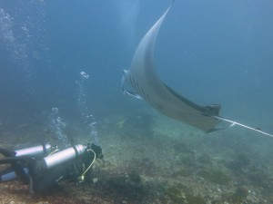 Elitza Germanov with Manta Ray in Komodo NP