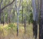 Paluma Range NP