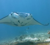 Mantarocka Indonesien