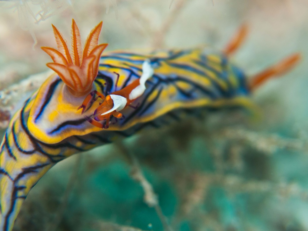 Nudibranch Nick Longfellow